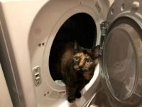Miss Marbles helps with the laundry