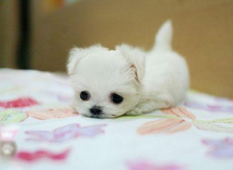 cuteness 7