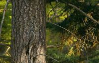 Art Wolfe's AMAZING photography! Now that's camouflage!