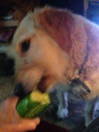 Babe eating cucumber