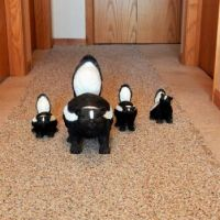 skunks in the hallway!