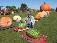 Huge Watermelons and Pumpkins