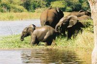 Kruger Park - Elephants