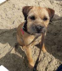 in het zand