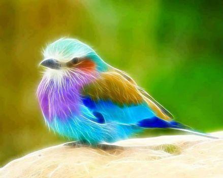 A birds electrical fantasy