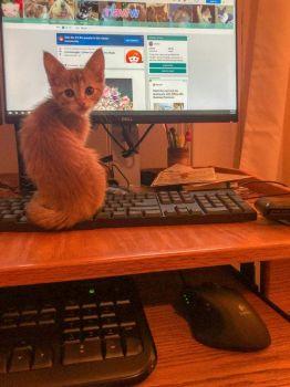 The decoy keyboard is working