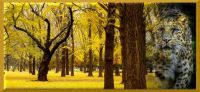leo in trees1