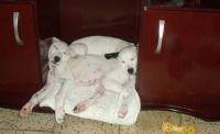 Esther & Mordecai, puppies