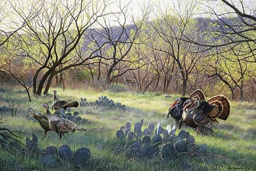Grande Morning-Rio Grande Wild Turkeys by Jim Kasper