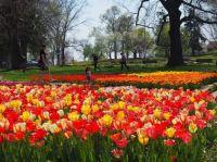 Last Tulip Puzzle