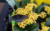 My butterfly, Patty.
