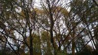 Railway Woods