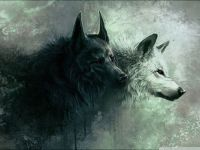wolf #3 normale