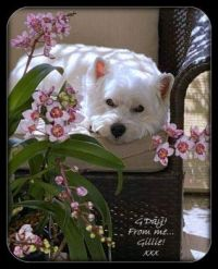 Gillie among the orchids