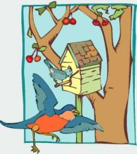 Theme: birds & birdhouses