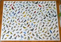 Fun Bird Puzzle 1000 pieces
