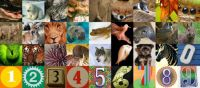 animal letters and numbers to even it out