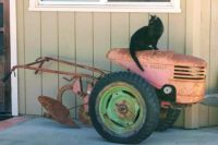 Jet the cat on old gas powered plow