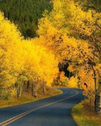 Road through golden foliage