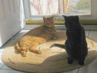 Mango & Ebony at front door 2015