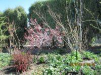 Botanical  Gardens 2012 Denver