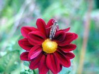 Grasshopper on blossom