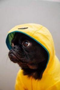 Toshi wearing his rain coat