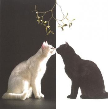 Kittehs Under the Mistletoe