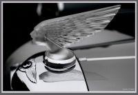 Lalique  hood ornament on a Bentley