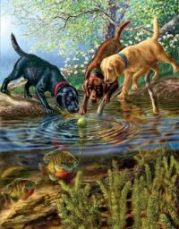 Fish and Dogs #4