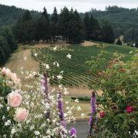Sweet Cheeks winery in Oregon