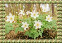 Jarní květiny...  Spring flowers...