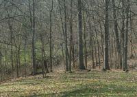Wild Turkeys in Kentucky