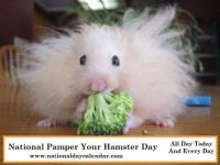Today Is National Pamper Your Hamster Day!