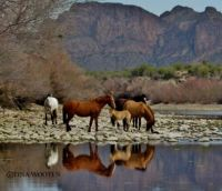 Wild Horses running free on their land!