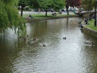 ducks at bourton on the water