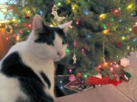 Henry and the Christmas Tree