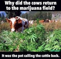 cow and pot