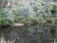 Mt William National Park - Tasmania
