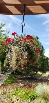 Pergola hanging flower basket
