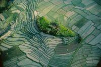 Islet in the Terraced Rice Fields of Bali Indonesia by YANN ARTHUS BERTRAND