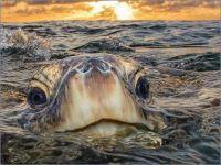 Peek a Boo by Philip Waller