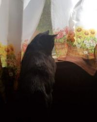 Brus watching the world go by