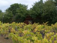 Vinyard and old wine press somewhere in France