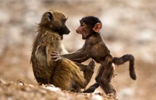 Write a Caption!  2 monkeys