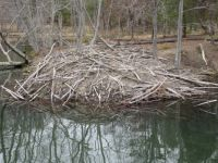 Beaver Home