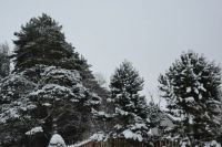 Wintry trees.