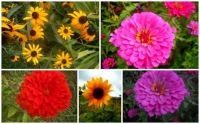 Flowers - Aug1