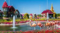 Miracle Gardens of Dubai