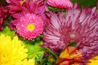 Bouquet of colorful mums